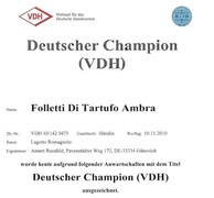 Deutscher Champignon (VDH) - Ambra